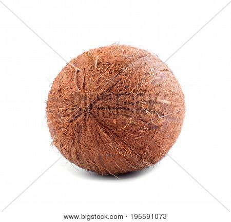 A view from behind on a whole hairy coconut isolated on a bright white background. Exotic tropical fruits that grow on palms. Healthy nutritious ingredients for summer meals.