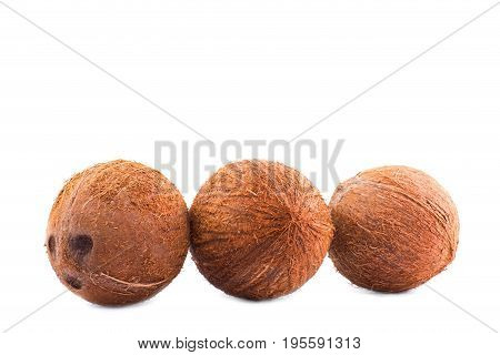 A group of three light brown coconuts isolated over the radiant white background. A whole coconut with scratchy texture. Delicious fresh summer fruits. Vegetarian lifestyle.
