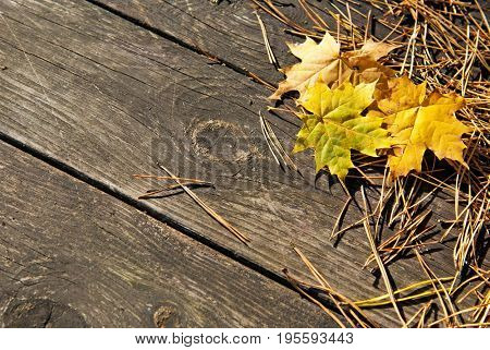 Wooden autumn background with leaves