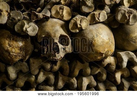 Bones skeletons and skulls stack on top of each other