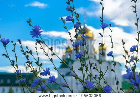 Blue summer flowers on the background of blurred shining golden domes of a Russian Orthodox Church against white clouds on blue sky