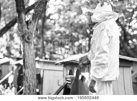 Rearview monochrome shot of a beekeeper standing near beehives at his apiary in the garden copyspace.
