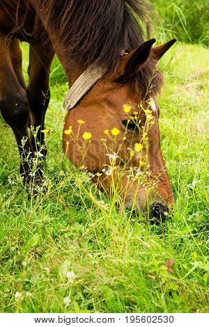 A horse in the meadow eats grass. She walks around the village alone decorating the surrounding area. Very beautiful and noble animal.