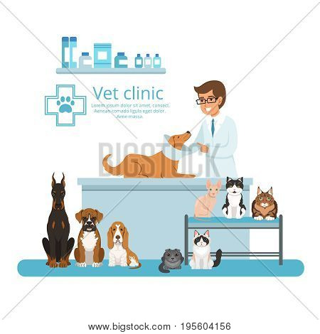 Animals in cabinet of vet hospital. Vector illustration. Medical vet clinic for animals cat and dog