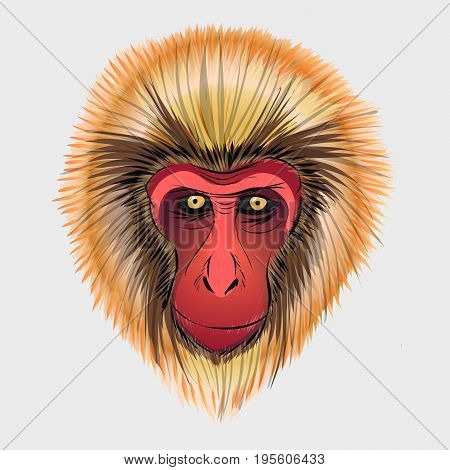 Monkey head sketch. Vector graphics color picture of Macaca fuscata