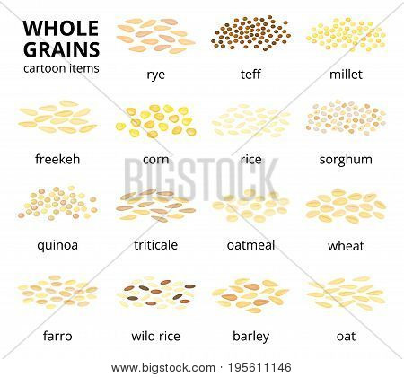 Collection of different cartoon whole cereal grains isolated on white background with names.