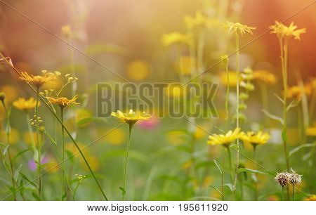 Summer meadow with yellow flowers. Summer meadow with flowers brightly illuminated by the sun.