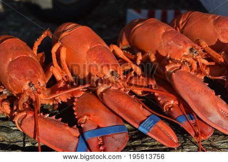 Beautiful Red Cooked Crustaceans Perfect for Supper