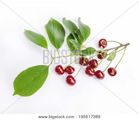 Sweet fresh cherry with green leaf and branch isolated on white background