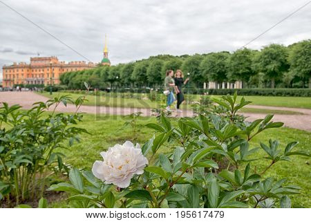 SAINT - PETERSBURG, RUSSIA - JULY 16, 2017: Pionies flowering on The Field of Mars in historical part of the city. On the background is Saint Michael (Mikhailovsky) Castle