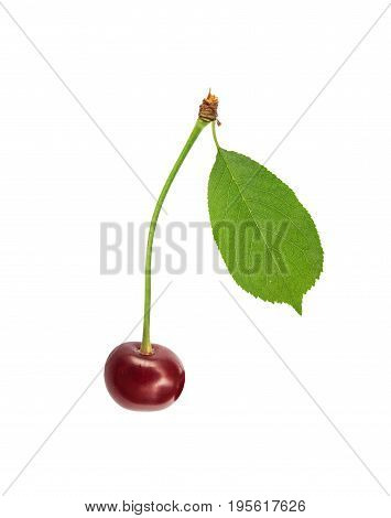 Sweet fresh one cherry with green leaf isolated on white background
