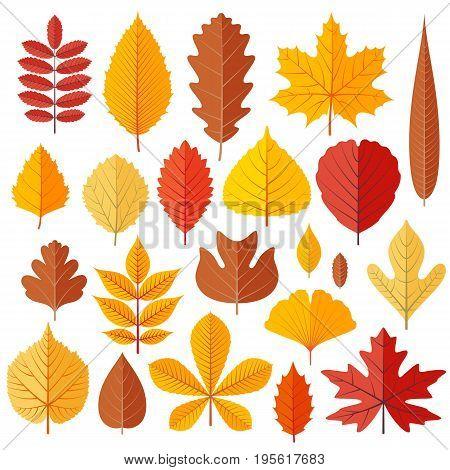 Set of tree autumn leaves isolated on the white. Cartoon vector illustration.
