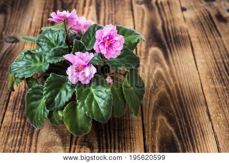 A Pot With Violets On Wooden Background