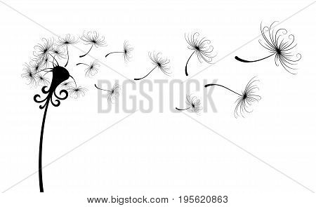 The Flowers field dandelion with flying seeds.