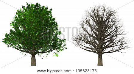 Tree with leaves and leafless tree isolated on white background, 3d illustration