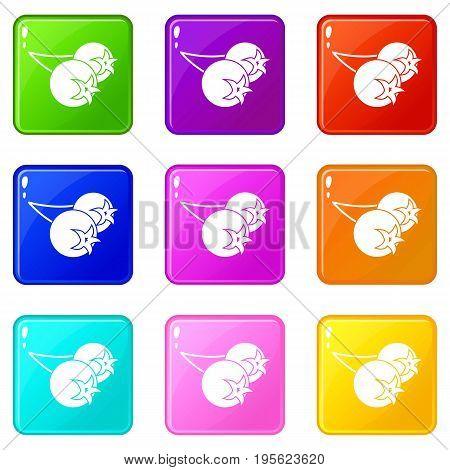 Chokeberry or aronia berry icons of 9 color set isolated vector illustration