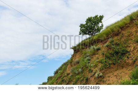 A Lone Tree On A Sloping Green Field In Hills Terrain Region