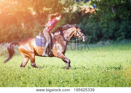 Young rider woman on galloping horse without holding bridle. Free riding equestrian background