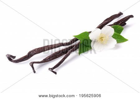 Vanilla sticks with flower and leaf isolated on white background.