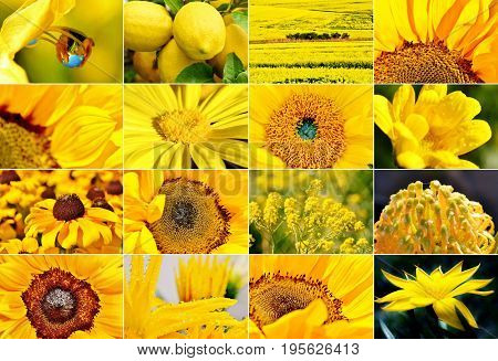Collage with yellow flowers and plants in sunlight