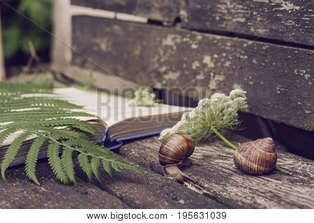 stillife with a book snails and green fern on a wooden background