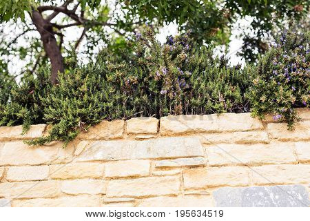 different green bushes and herbs background outdoor