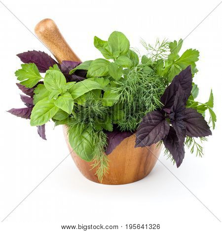 Fresh spices and herbs in wooden mortar isolated on white background cutout. Sweet basil, red basil leaves, dill and parsley.