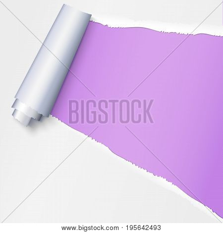 Realistic torn open paper with space for text on purple background, holes in paper. Torn strip of paper with uneven, torn edges. Coiling torn strip of paper
