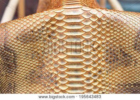 Genuine python snakeskin leather, texture background, Bali island exotic skin