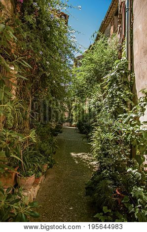 View of alley with stone houses, plants and slope in Saint-Paul-de-Vence, a lovely well preserved medieval hamlet near Nice. Located in Alpes-Maritimes department, Provence region, southeastern France