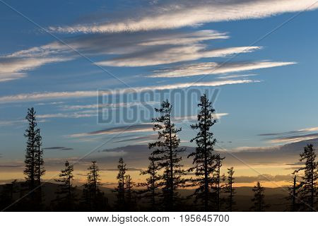 Silhouettes of trees against a bright blue sky at sunset in the summer