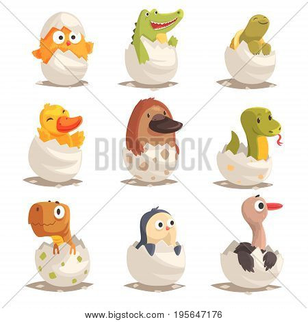 Chicks and reptiles hatch from eggs set, unborn animals vector Illustrations isolated on white background