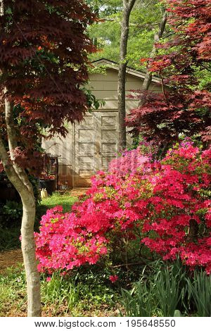 old White Cottage Shed among colorful flowers and trees in forest woods
