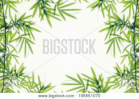 Bamboo leaves frame isolated on white background