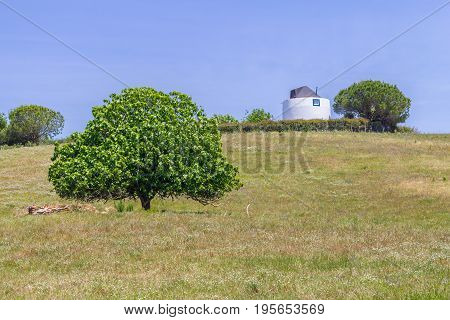 Windmill And Tree In The Field In Vale Seco, Santiago Do Cacem