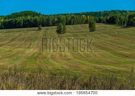 Field after haymaking. The chopped lawn seemed to have been combed.