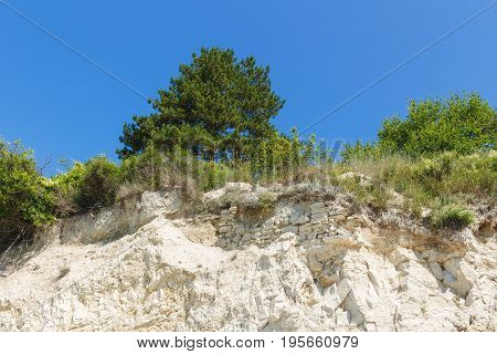 Tree grows on top of sandstone under blue sky view from below.