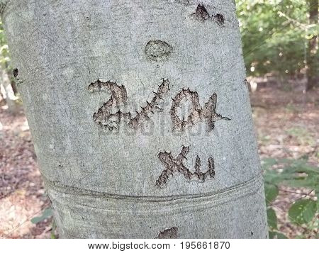 tree trunk with 2104 Xu carved in it