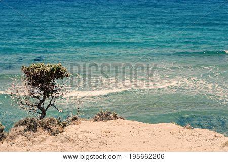 Small tree on Kos Island beach in the vicinity of Kefalos. Greece Island Kos