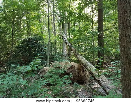 several fallen and leaning trees in the green forest