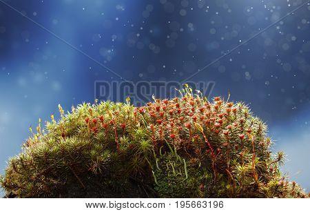 Rain On Mossy Hummock