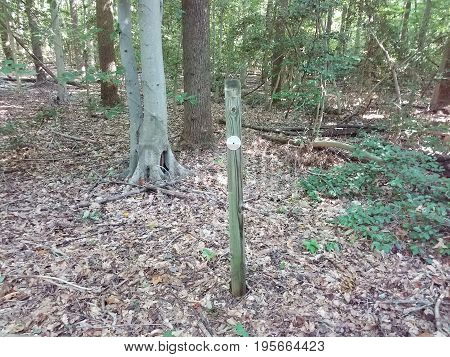 wooden post or stake with metal circle in the forest