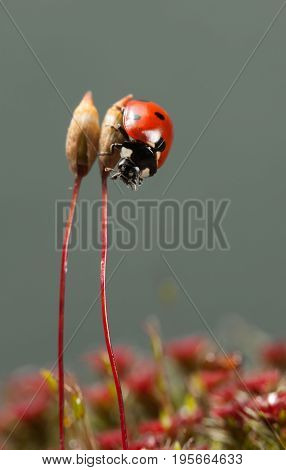 Lady-bird Beetle Climb Down