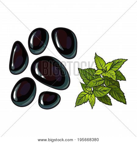 Black basalt massage stones and mint leaves, spa salon decoration elements, sketch vector illustration on white background. Realistic hand drawing of basalt stones for hot stone massage in spa salon