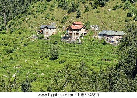 Residential Area midst Cedar and Pine Trees at Dalhousie