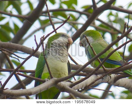 Pair of parrots perched on tree branches.