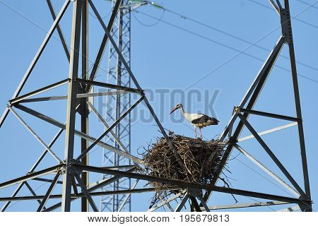Stork in nest on the mast of a high-voltage power line