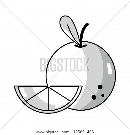 line delicious slice orange fruit with vitamins and protein vector illustration