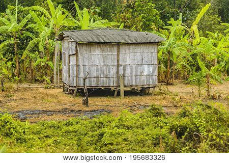 Cane House At Cacao Plantation