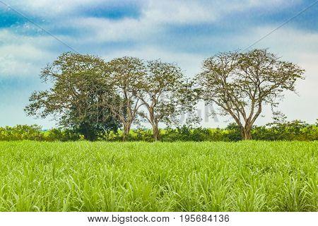 Tropical Rural Landscape Scene, Ecuador